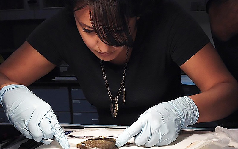 Evelyn Bond dissecting a fish.
