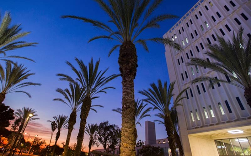 Langsdorf Hall surrounded by palm trees at sunset
