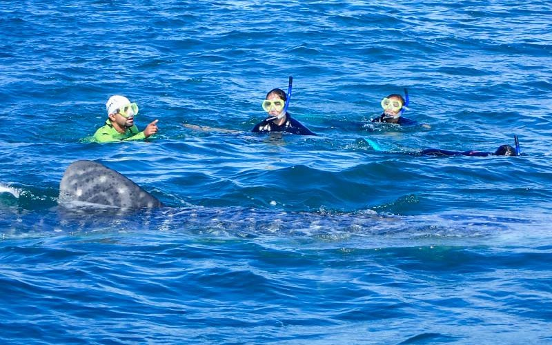 Student Researcher conducts whale research.