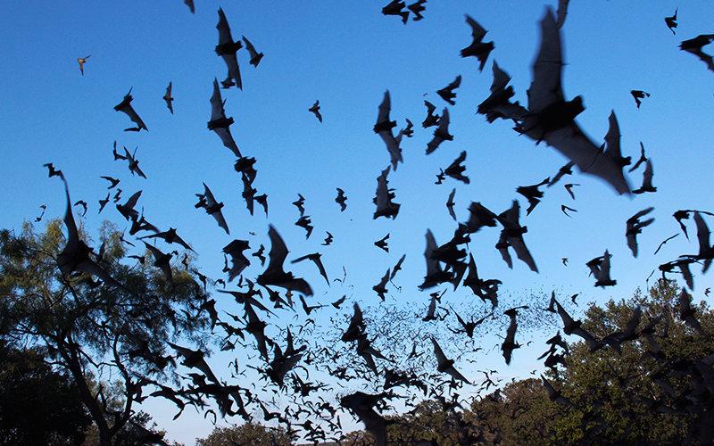 Tucker Bat Night