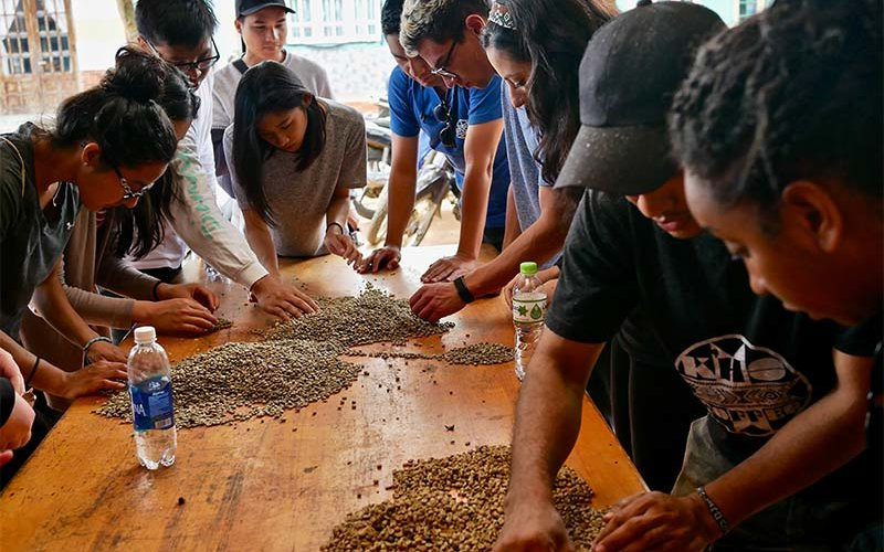 Study abroad students sort coffee beans