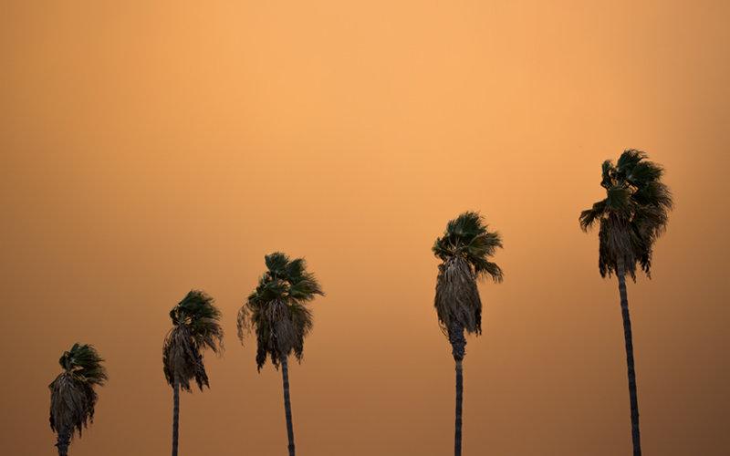 Smoke Palm Trees