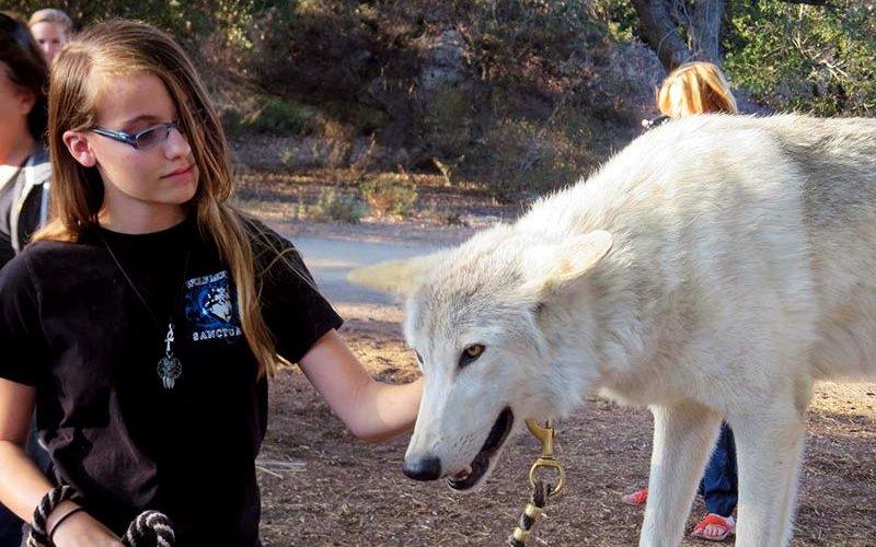 Wolf Ambassadors