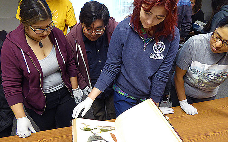 Students looking at illustrations of birds.