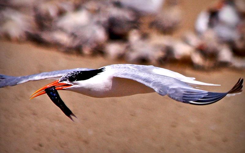 Seabird in flight