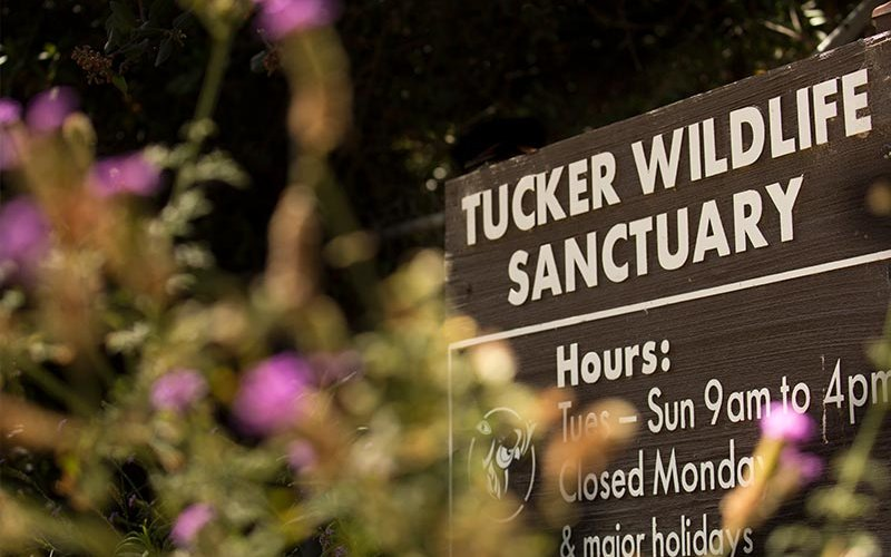 Tucker Wildlife Sanctuary