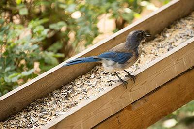 Bird perched near bird feeder