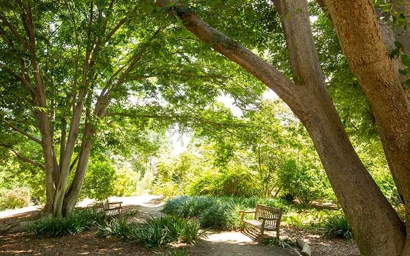 Fullerton Arboretum trees in spring