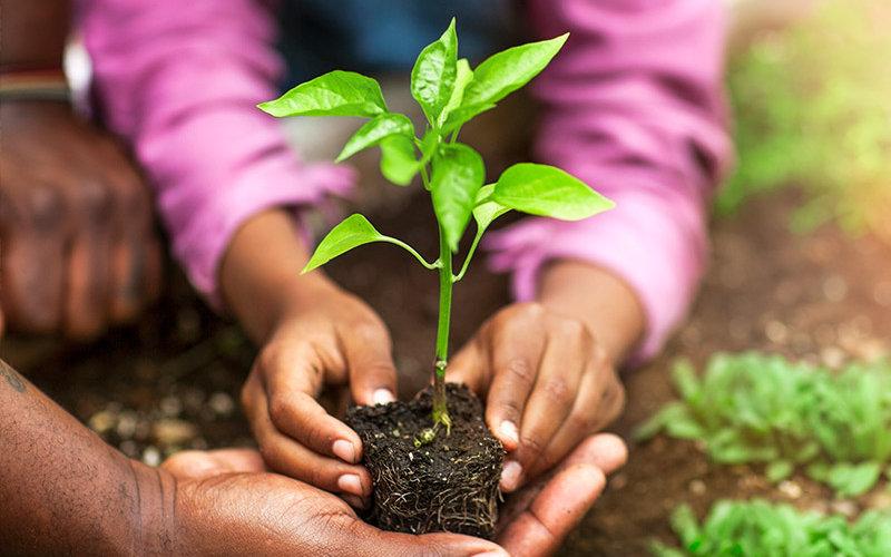 People gardining with seedling