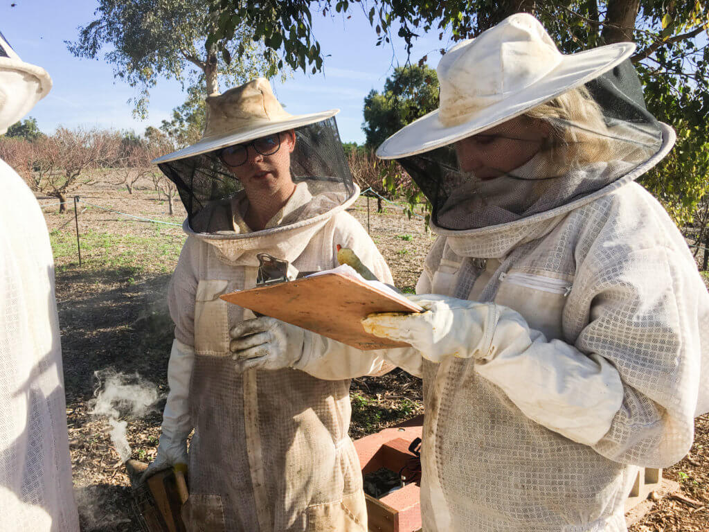 Bee Researchers