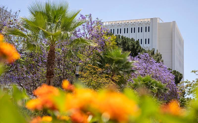 Spring flowers and Langsdorf Hall