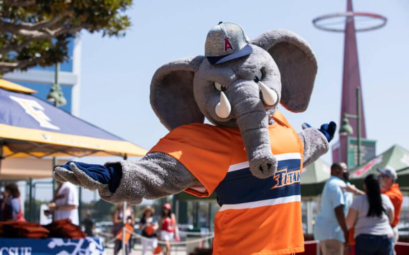 a man wearing an elephant mascot costume with a baseeball cap